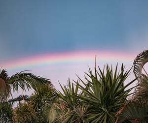 nature, rainbow, and trees image