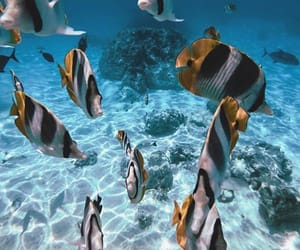 coral reef, diving, and fish image