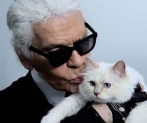 fashion, cat, and karl lagerfeld image