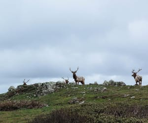 clouds, hill, and reindeer image