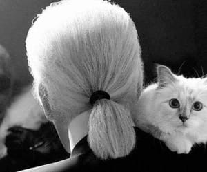 choupette, cat, and karl lagerfeld image