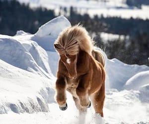pony, snow, and animal image