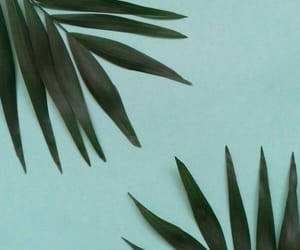 leaves, background, and green image
