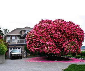house, Dream, and flowers image