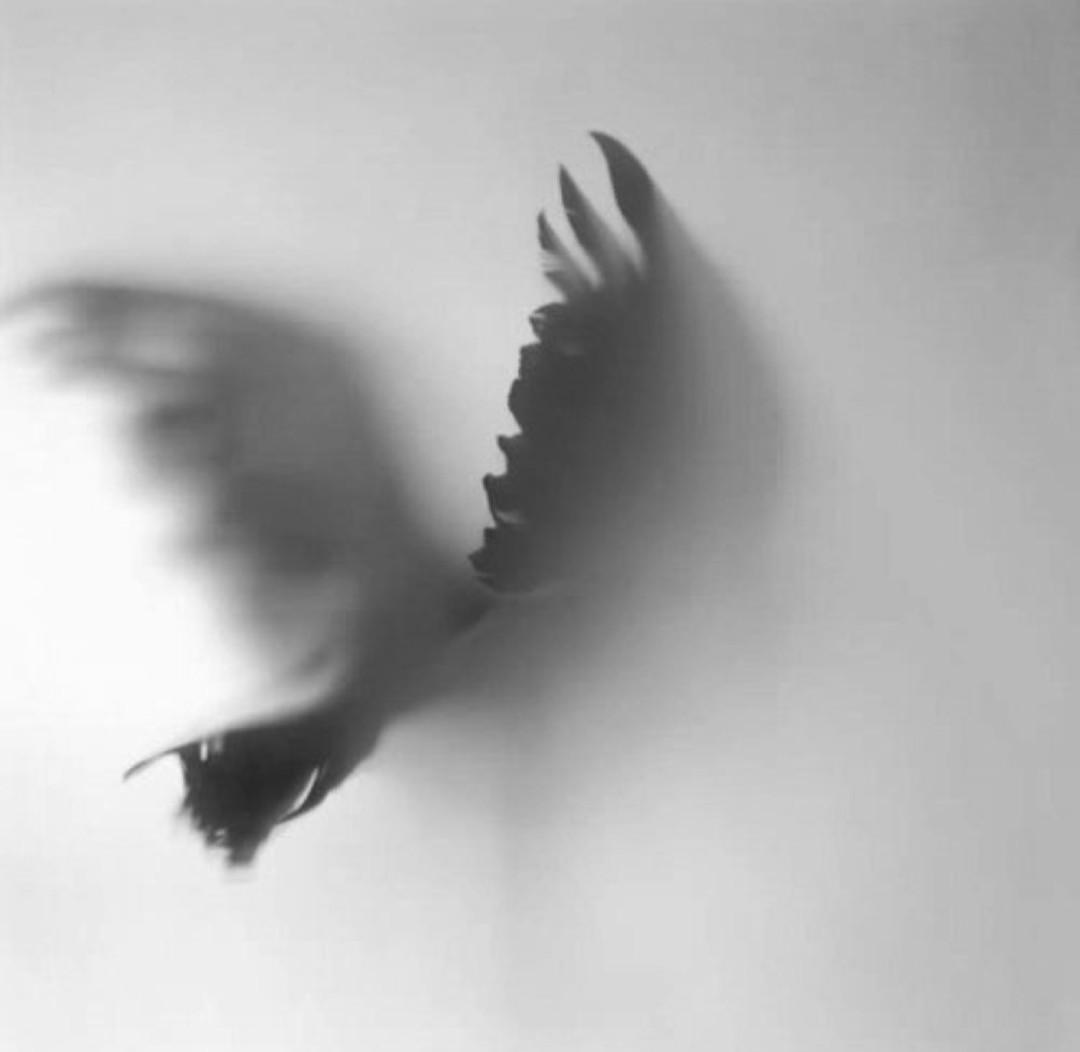 птица сломала крыло картинки только