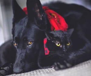 animal, black cat, and dog image