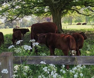 animals, cows, and green image