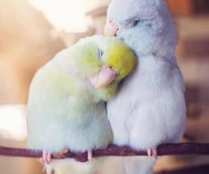 parrot, cute, and animal image
