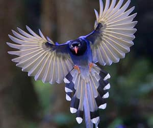 bird, photography, and blue image