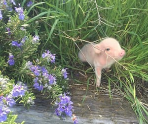 pig, flowers, and animal image