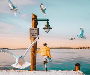 birds, depth, and inspo image
