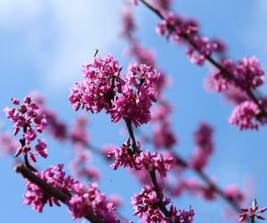 fiore, fiori, and flowers image