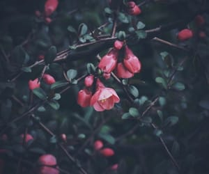 fiori, pink, and flower image