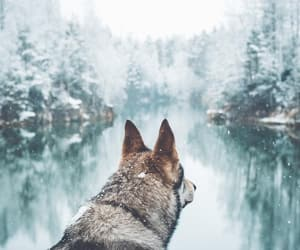 beautiful, pet, and cold image