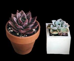 cactus, decor, and overlay image