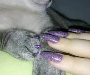 cat, nails, and purple image
