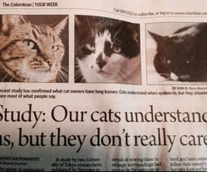 they don't really care, cats understand, and this is news? image