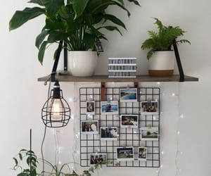 decor, plants, and home image