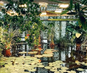 greenhouse, plants, and green image