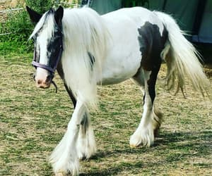horse, liebe, and pferd image