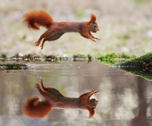 baby animals, cute animals, and reflection image