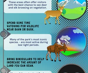 animals, national park, and wildlife viewing tips image