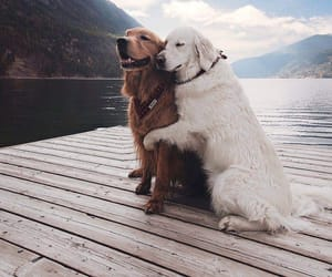 dogs, goals, and lové image