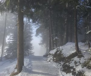 forest, snow, and landscape image