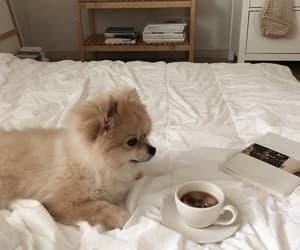 aesthetic, dog, and coffee image
