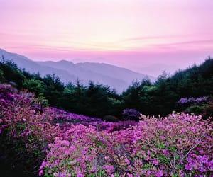 landscapes and natural image