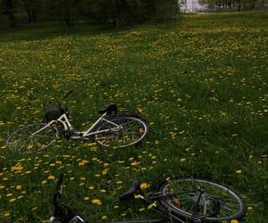 цветы, велосипед, and аллея image