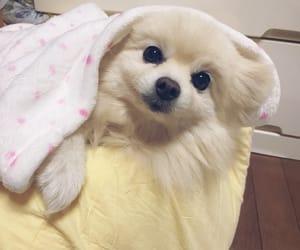 animal, dog, and japan image