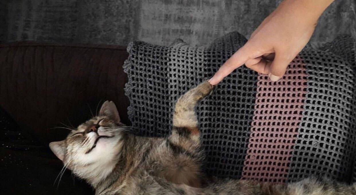 cat, animal, and finger image