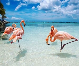 flamingo and summer image