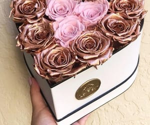gift, pink, and roses image