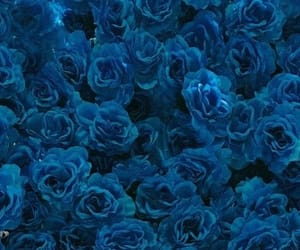 blue, header, and flowers image