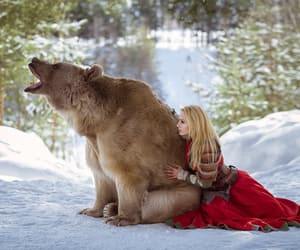 bear, snow, and model image