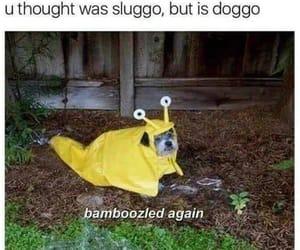 brilliant, joke, and doggo image