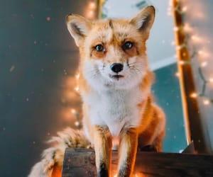 adorable, love, and animal image