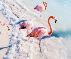 beach, flamingo, and places image