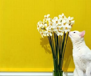 cats, flowers, and photography image