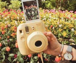 flowers, polaroid, and tulips image