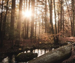 art, calm, and forest image