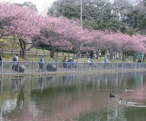 aesthetic, cherryblossom, and flowers image