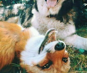 animals, dog, and fox image