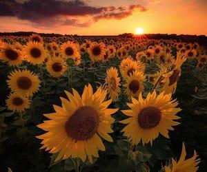 arts, beautiful, and sunset image