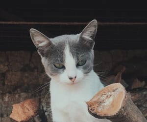 adorable, aesthetic, and cat image