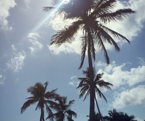 beach, Caribbean, and coconuts image