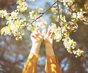 flowers, spring, and hands image