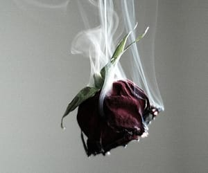 aesthetic, burn, and rose image